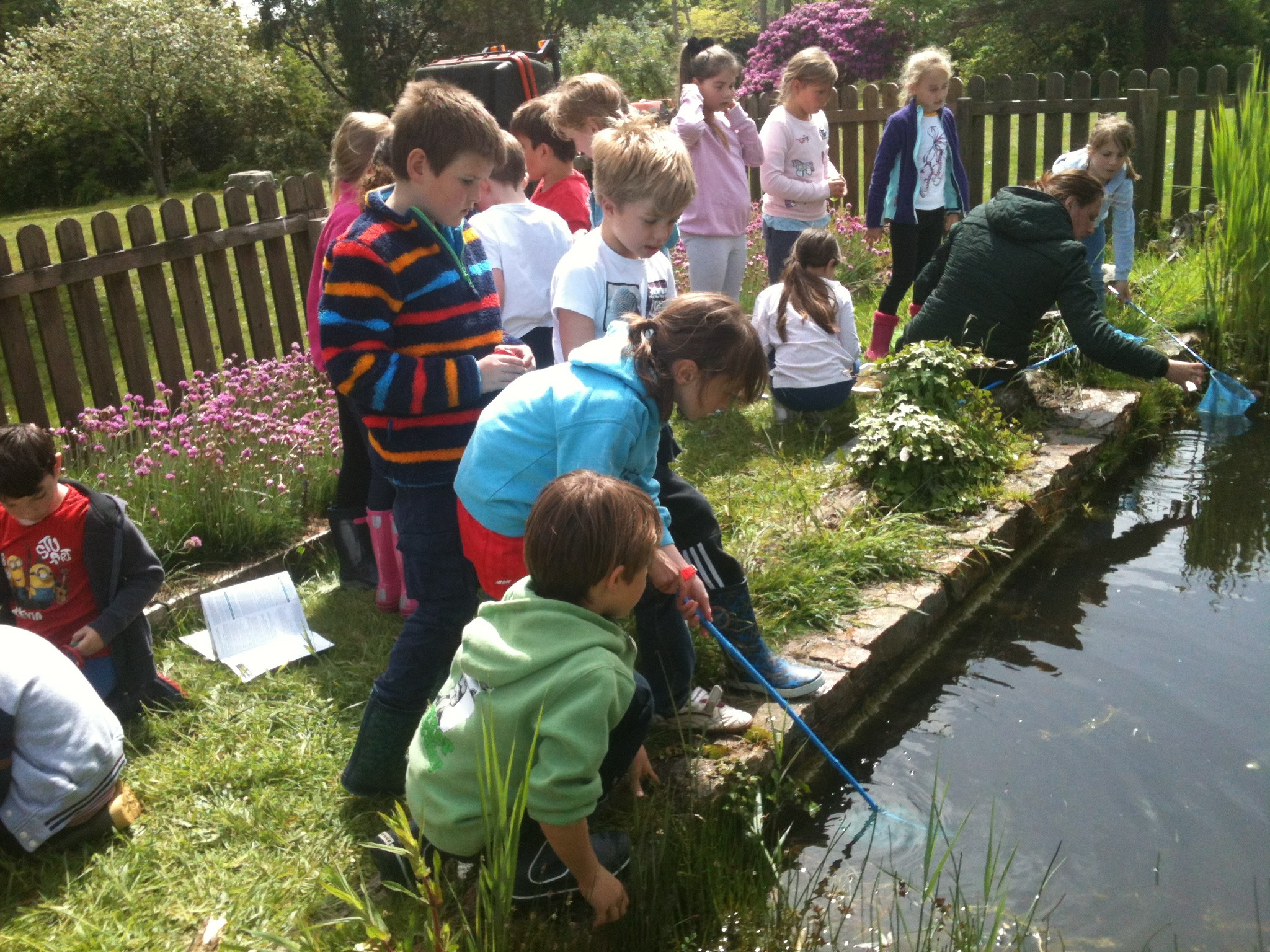 Form III Pond dipping Image